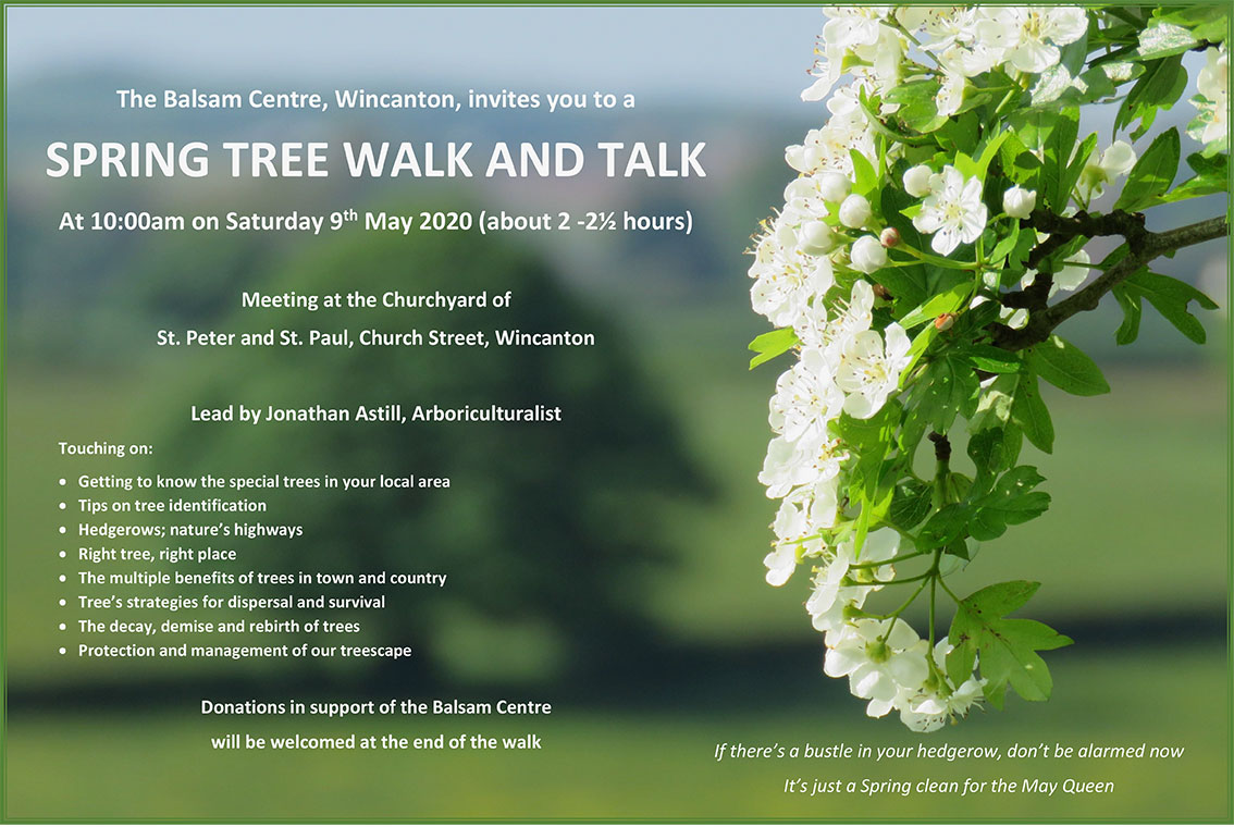 Wincanton Tree Walk and Talk